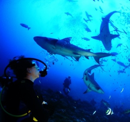 Diving with Bull Sharks in Fiji